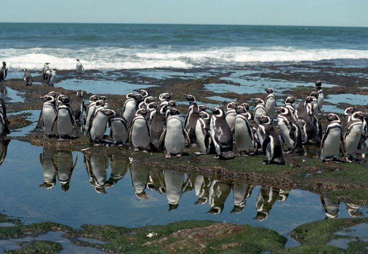 Turismo | Administración Portuaria de Puerto Madryn