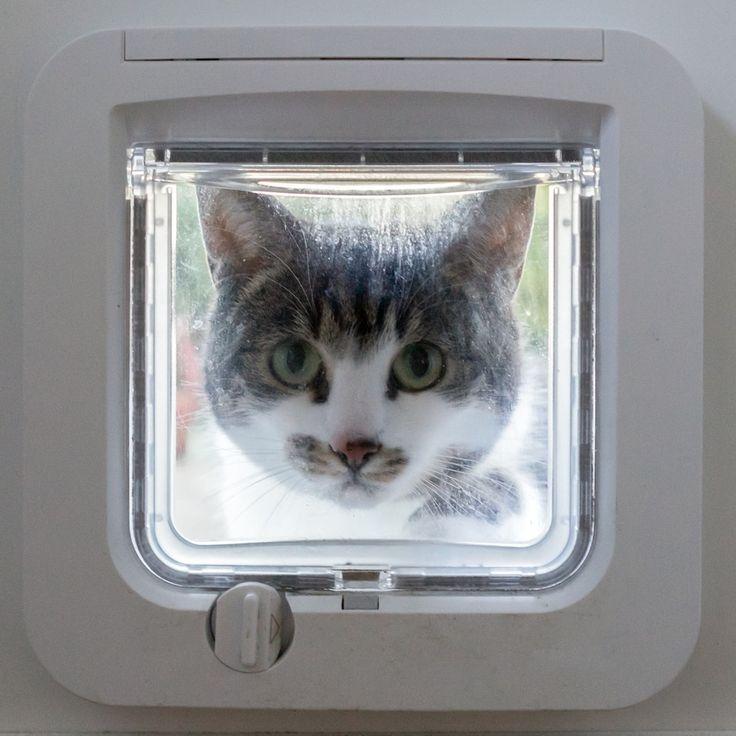 Katzenklappe mit Chip - Freier Eintritt mit Mikrochip - https://www.transportbox-katzen.de/katzenklappe-chip/