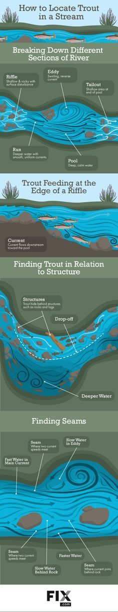 Learn to Read the Water to Locate Trout in Streams   Fix.com