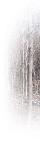 L'Agence forestière de la Montérégie offre une aide financière aux propriétaires qui souhaitent mettre en valeur leur terrain forestier. Cette aide financière atteint en moyenne 80% de la valeur des travaux.