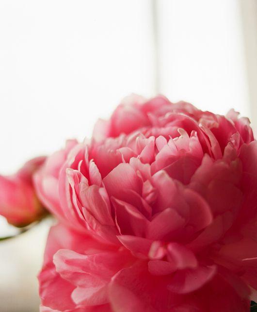 The shutterbugs melissa kaseman flowers pinterest for Pinterest flur