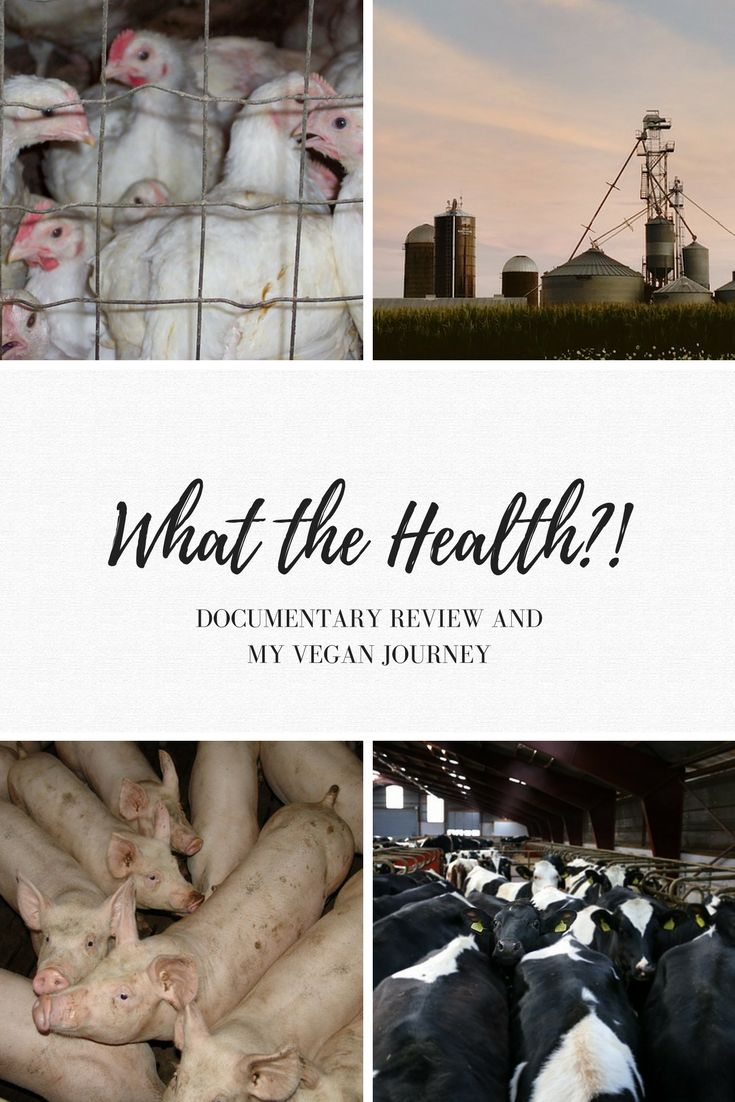 What the Health?! Documentary Review - The Wise Willow