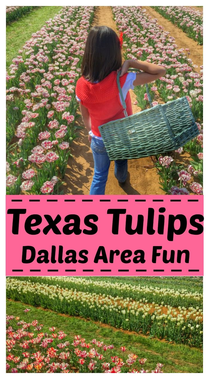 Visit Texas Tulips – A Spring Destination for Dallas Area