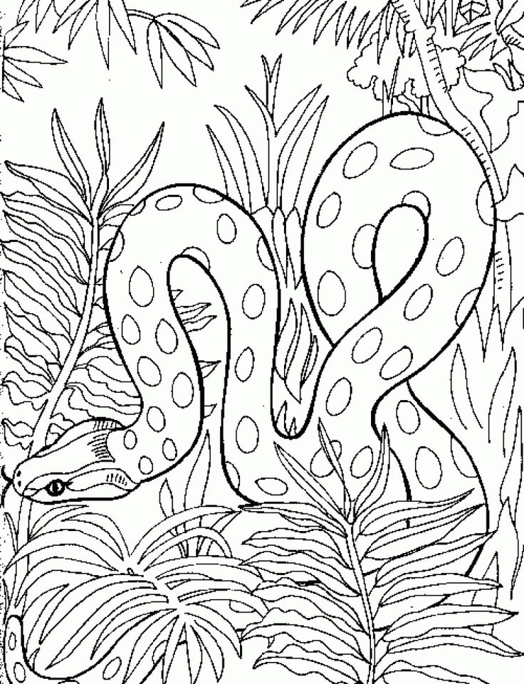 Detailed And Realistic Snake Free Printable Coloring Page