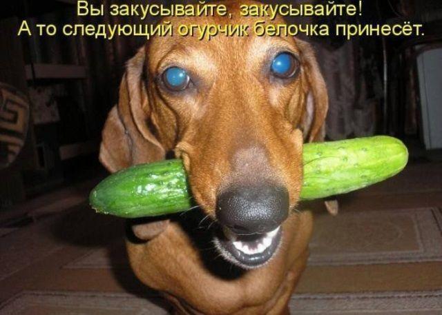 Картинки собак со смешными надписями