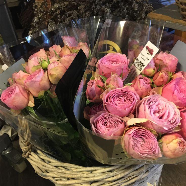 Lavender Lace roser
