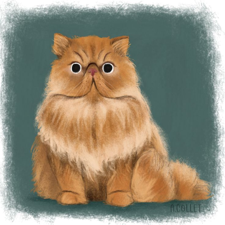 A ginger Persian cat for today's cattember prompt ! I