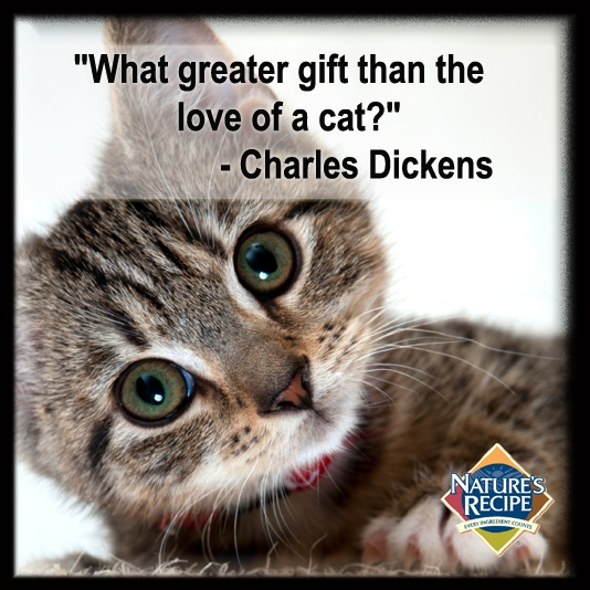 Cat Stock Quote 19 Best Cats And Dogs Images On Pinterest  Cats Kittens And Kitty Cats