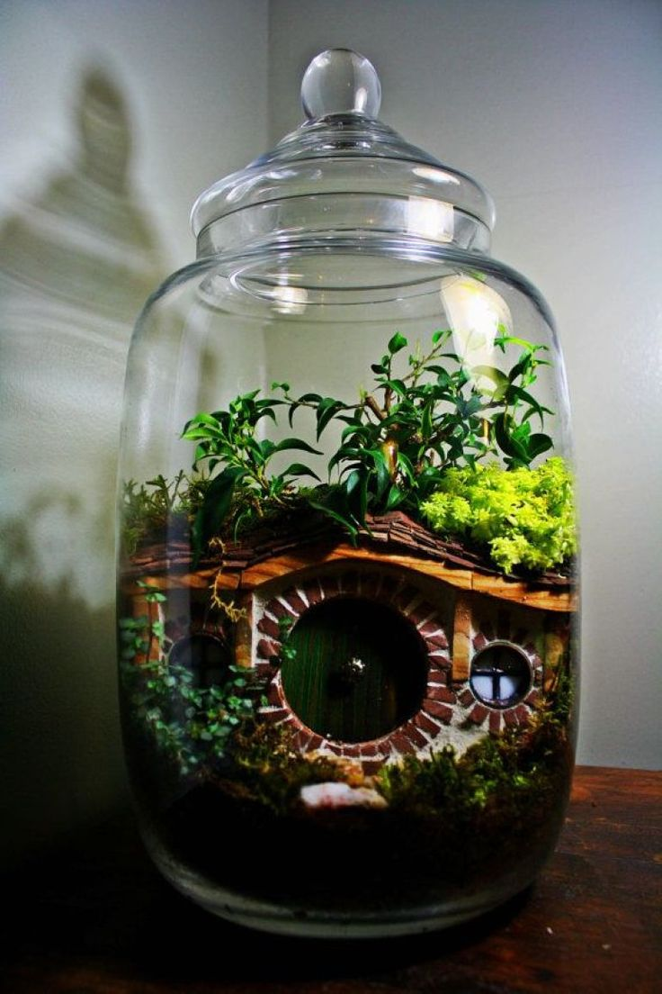 un terrarium ferm pour des plantes tropicales plantes pinterest plantes tropicales. Black Bedroom Furniture Sets. Home Design Ideas