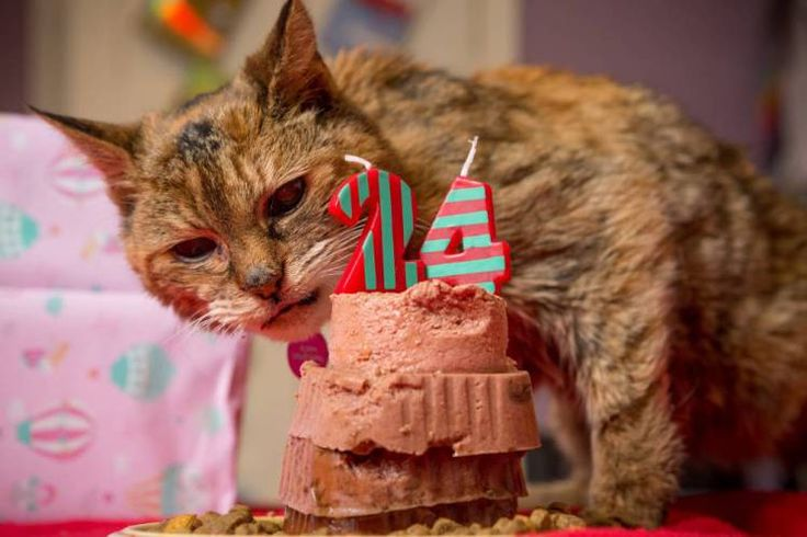 24-year-old moggy crowned world's oldest cat