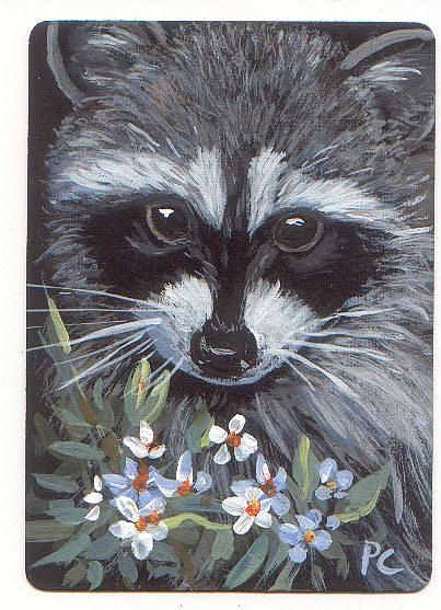 449 best images about RACCOONS in Art on Pinterest | Baby ... Raccoon Painting
