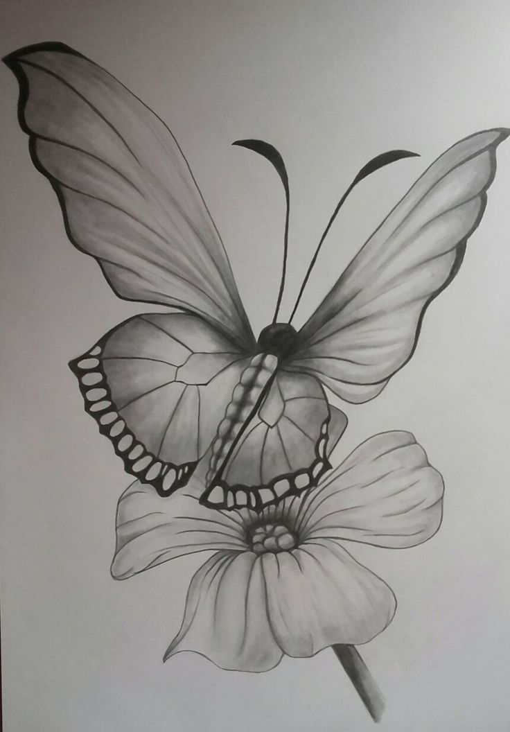 Pencil Drawings Of Flowers And Butterflies : pencil, drawings, flowers, butterflies, Bastelideen, Basteln,, Bastelideen,, Geschenke,, Geschenkideen..., Flower, Drawing,, Pencil, Drawings, Flowers,, Animals