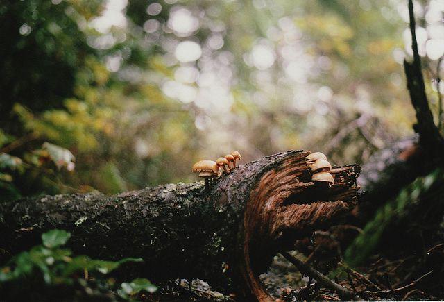 mushrooms on a log, Oregon - Anja Louise Verdugo