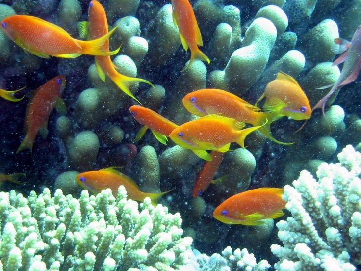Amazing World Edu-tourisms to Acquire New Knowledge : The Red Sea Fish World Edu Tourisms