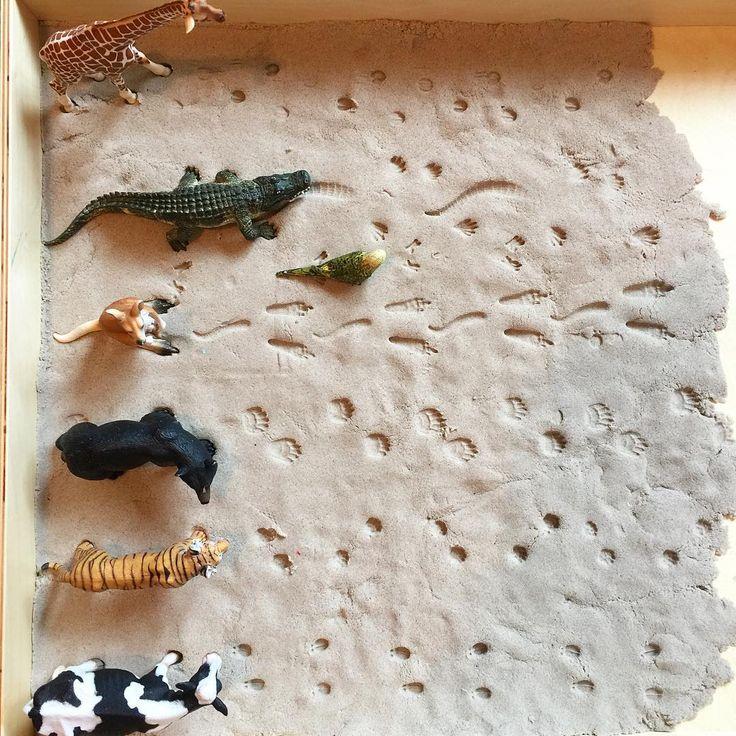 Мне самой такое удовольствие доставило разравнивать, утрамбовывать песок ..., делать отпечатки следов животных...подготавливая игру для дочки, представляю как ей понравится Вообще кинетический песок, наверное, есть уже у всех, все о нем знают и играют ) он правда, какой-то невероятный!) Если мне нужно, что-то сделать срочное, я высыпаю песок в песочницу, даю Алисе формочки, фигурки... И минут на 20-30 могу быть свободна . #маа1г11м #развивашки_алисы_