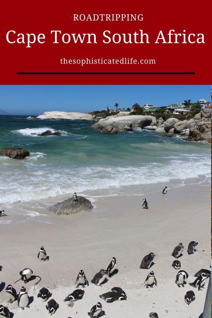 Cape Town Road Trip Along Cape Peninsula South Africa Travel Africa Travel Guide Africa Travel
