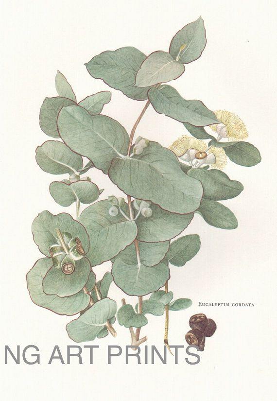 Vintage Margaret Stones Eucalyptus Print by NGArtPrints, $42.50