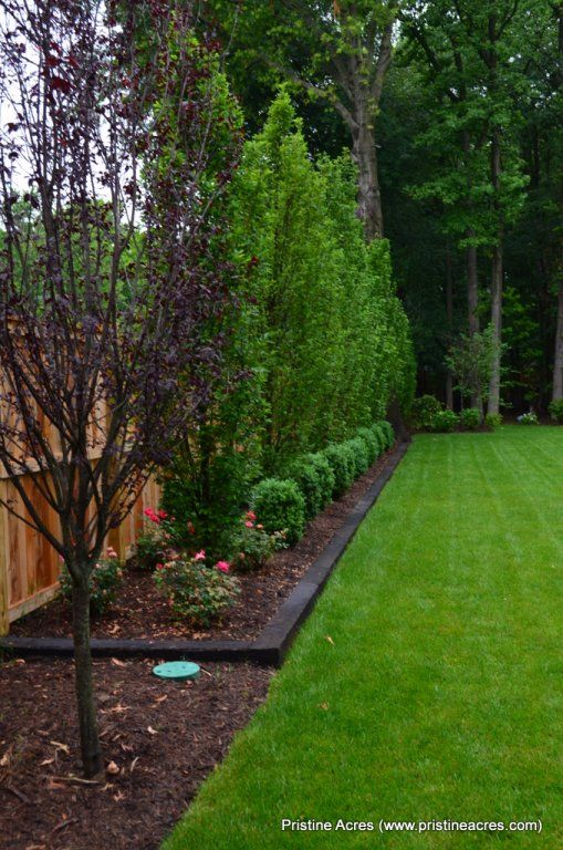 Backyard Designs Ideas lovely backyard desaign ideas with large fence and wooden stair close green grass Purple Tree And Border Along The Back In Front Of The Cedars To Keep Mulch Privacy Hedgebackyard Privacy Treesback Yard Privacy Ideasbackyard Landscaping