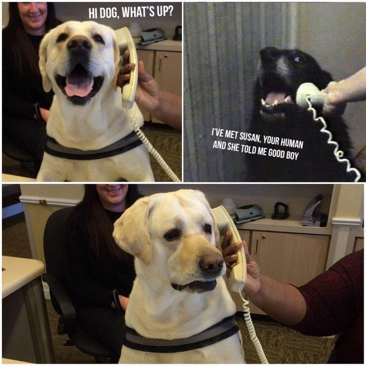 Hi, dog! What's up? I've met Susan, your human, and she
