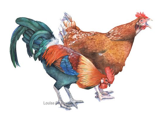 Chicken and Rooster print CR2716. Chicken Rooster от LouiseDeMasi