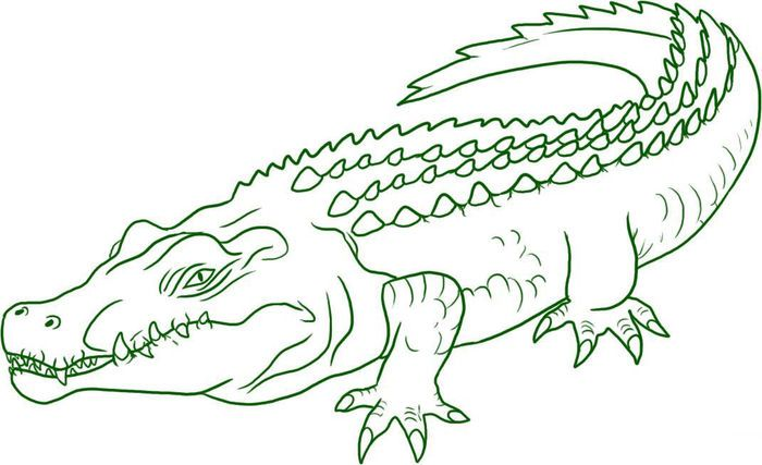 vector the crocodile coloring pages | coloring pages, animal coloring pages,  crocodile  pinterest