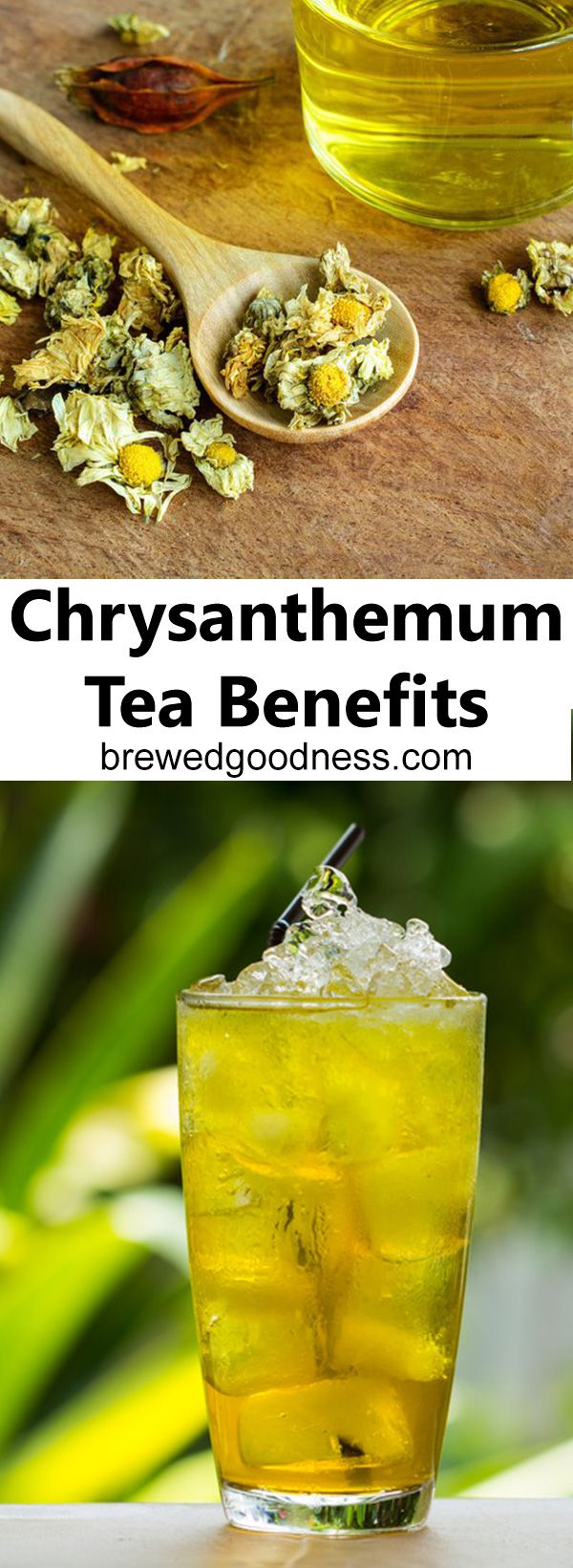There are a ton of health benefits to drinking chrysanthemum tea!