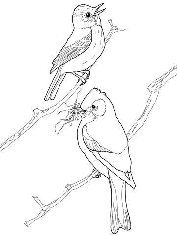 11 Best Images About Burgess Bird Book On Pinterest
