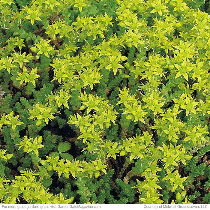Heat Tolerant Perennials: The 90 Best Heat Tolerant Plants Images On Pinterest