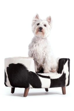 HauteLook | Vintage Modern Decor: Boss's Chair/Bed