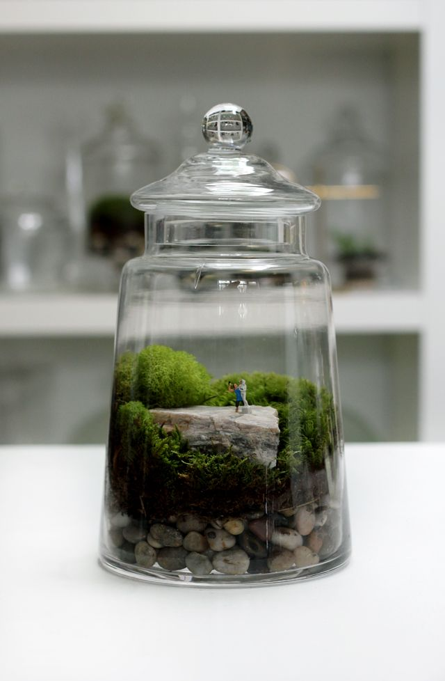 Masterpiece Limited Edition Twig Terrariums Moss