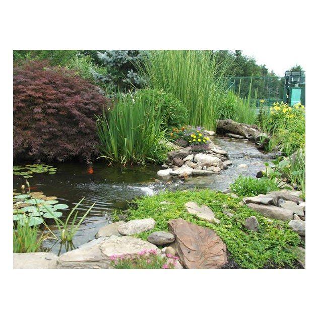 Shady garden pond pond design ideas cool shady garden for Shady courtyard garden design