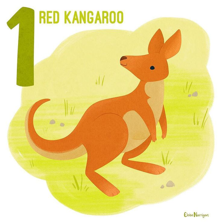 Arguably the most iconic Australian animal is the kangaroo and the Red Kangaroo is the biggest species (and also the largest living marsupial). David Attenborough taught me that these guys lick their forearms to stay cool in extreme heat which like the best nature facts is neat and slightly gross  (also its definitely winter here and extreme heat sounds great) --- #someanimalsofaustralia #redkangaroo #kangaroosofinstagram #australia #australianfauna #australiananimals #series #countingseries…