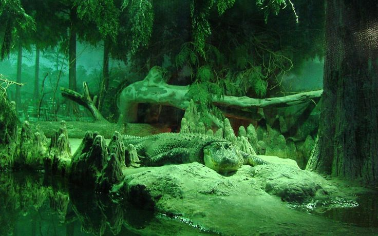 1920x1200px crocodile images for backgrounds desktop free by Walton Chester