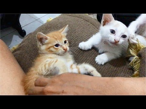 So Many Kittens Playing So Active Cute In My House As Always In 2020 Cute Kitten Gif Cute Cat Gif