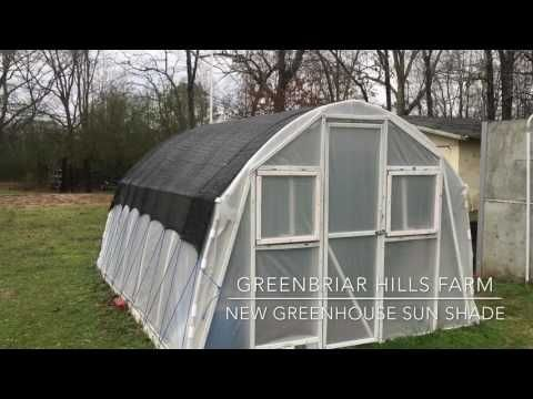 Greenhouse Hydroponic Tomato Update March 7 2017 - YouTube