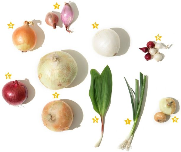 Tipos de cebolla y similares