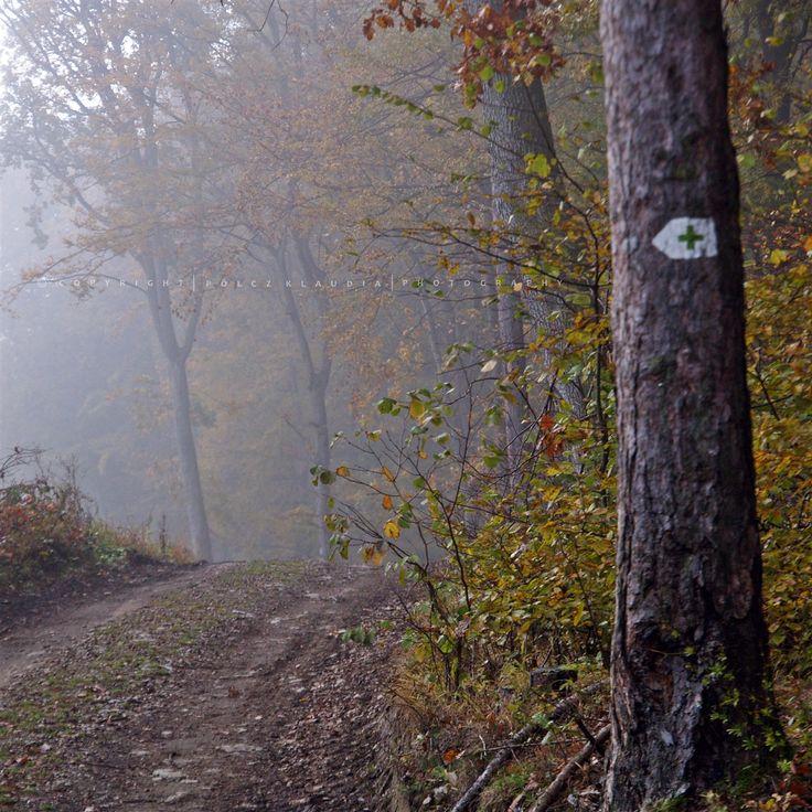 Noha néhány óra alvás után ébredtem, nem tudtam ellenállni a ködnek. Azonnal útnak indultam és mint oly sokszor, most is csalóka volt a hely...