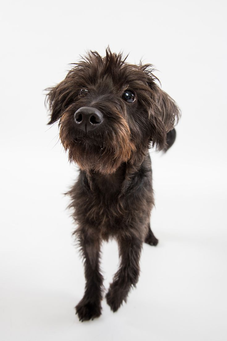 You can adopt cute dogs like Rocket, at the Animal Welfare League.
