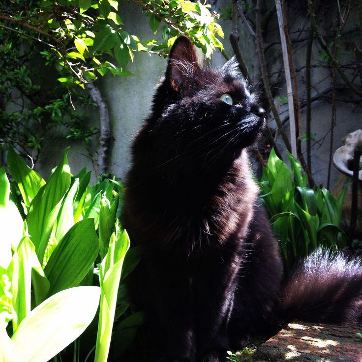 Dora Panther cat