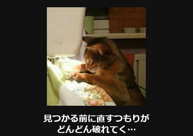 笑って癒される 猫の大喜利