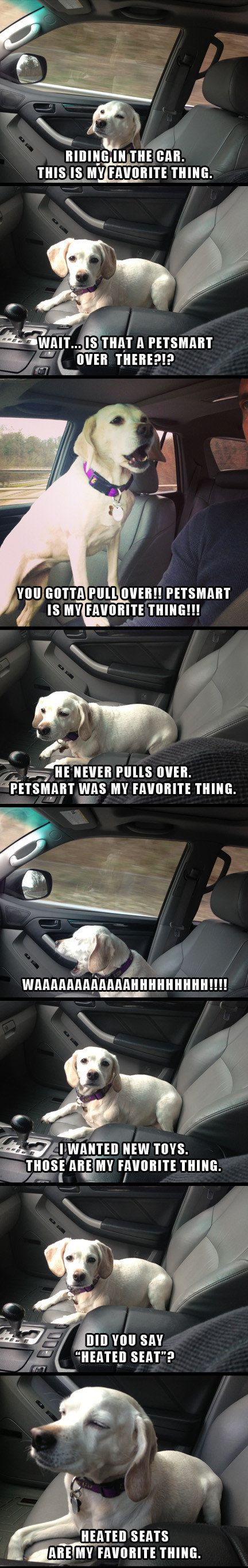 Funny Favourite Thing Dog