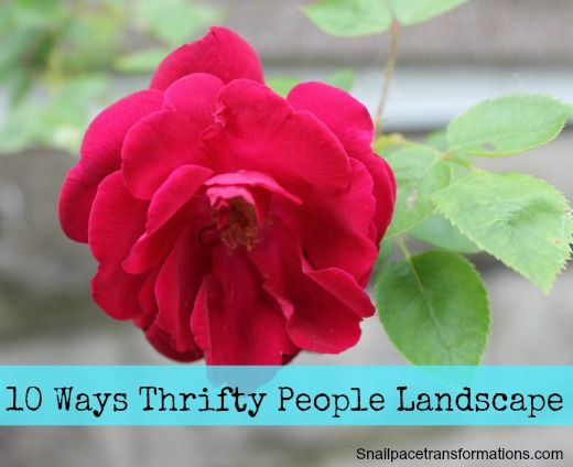 Thrifty people spend very little money on their landscaping  but their  yards still look amazing  Here are 10 ways thrifty people landscape for less. 1000  ideas about Landscaping Costs on Pinterest   Walkways  Yards