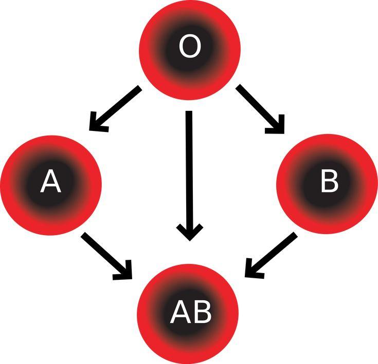 Ομάδα αίματος B Rh + ή ΒRh - Το γονίδ&iot...