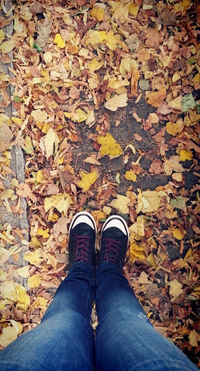 Autumn leaves Bratislava, Slovakia