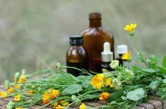 Several itch remedies for dogs, including:Concept of calendula flower essential oil and tincture