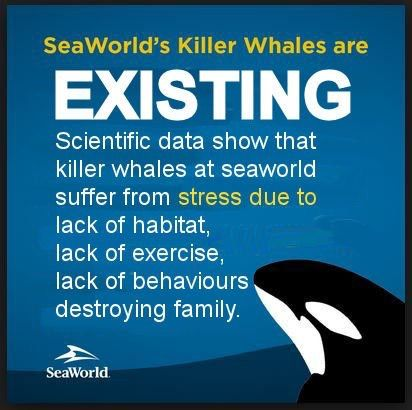 SeaWorld's business model must change. Marine parks must end captivity and stop the breeding of orcas. Empty the tanks! #seaworld #dolphinproject #ingridvisser #opseaworld #captivitykills