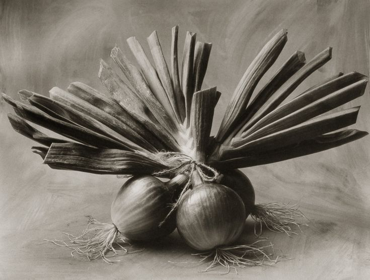 Three Asian Onions ©Cy DeCosse Fine Art Photography. The Beauty of Food Collection. Limited edition platinum-palladium print. CyDeCosse.com #photography #art #food