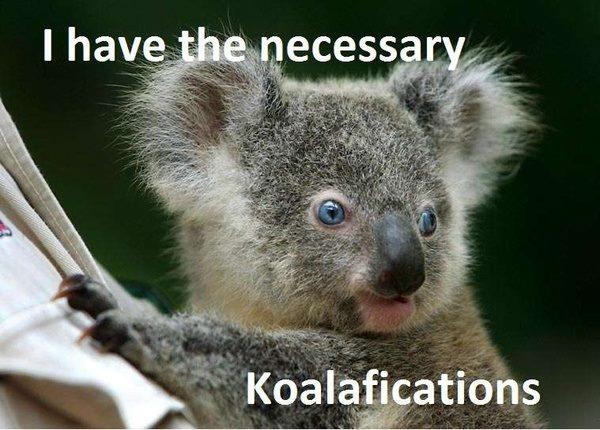I have the necessary Koalafications!