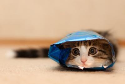 cat food?