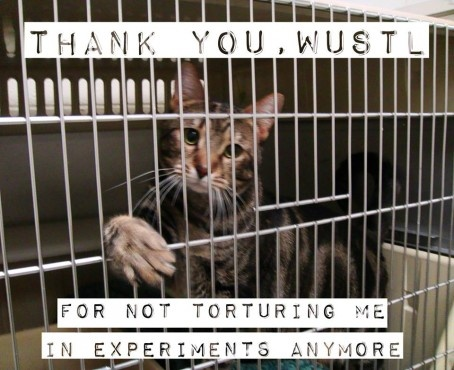 Good news! WUSTL (Washington University in St. Louis) Stops Cat Abuse!